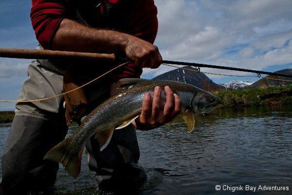 Alaskan trout